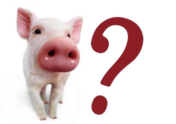 cerdo1